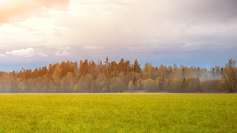 Een gebied met gras en bos de Herfstlandschap dat wordt uitgestrooid stock afbeelding