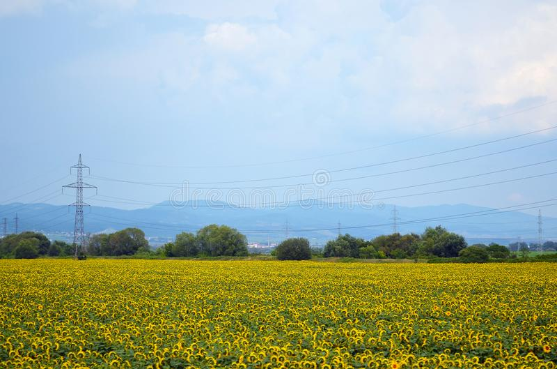 Een gebied van gele zonnebloemen en machtspolen en bergen stock foto's