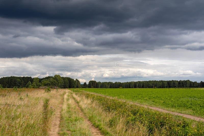 Een gebied van groen en geel gras, op de horizon een stormachtige hemel met grijze wolken stock foto