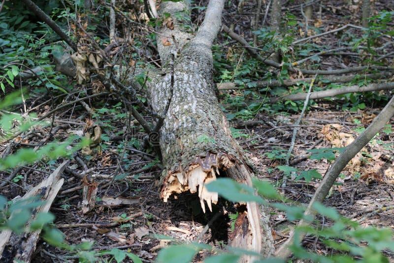 Een gebroken kool van een boom op de grond royalty-vrije stock foto