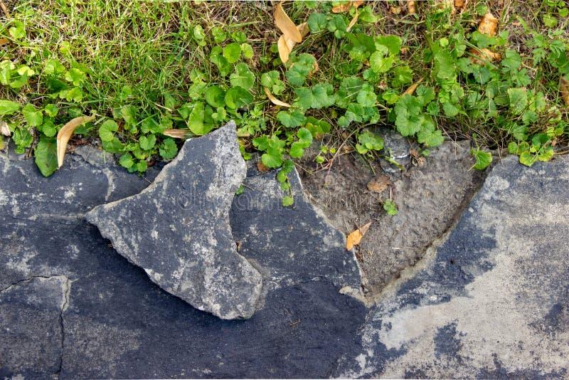 Een gebroken stuk van cement of grijs pleister van oud, vernietigd metselwerk Jong groen gras op het gazon dichtbij Vlak leg stock afbeelding