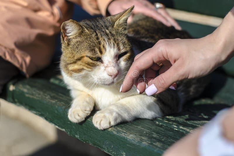 Een geel-witte verdwaalde kat zit op een bank en een bejaarde en een jong meisje met een mooie manicureslag haar royalty-vrije stock foto's
