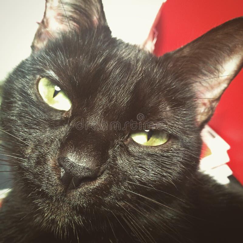 Een geheimzinnige zwarte kat met groene ogen stock fotografie