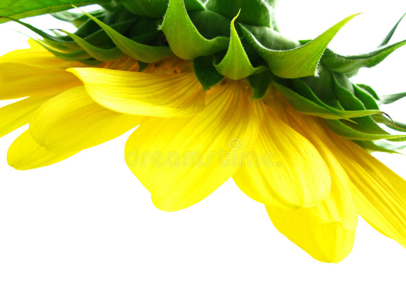 Download Een gele kroonluchter stock foto. Afbeelding bestaande uit geel - 10777618