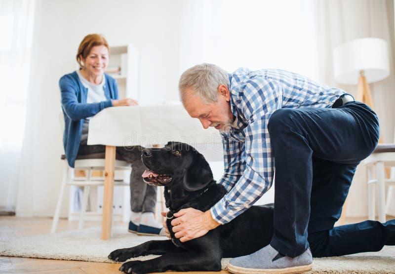 Een gelukkig hoger paar binnen met een huisdierenhond thuis stock afbeeldingen