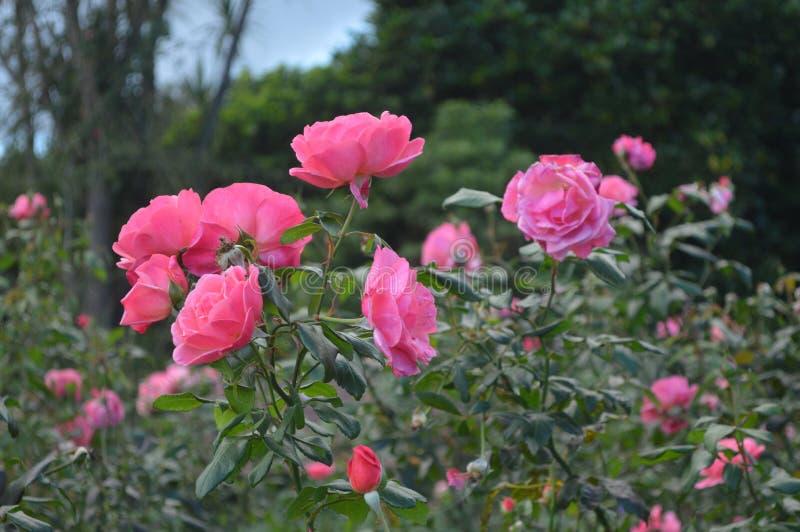 Een gelukkig milieu van de bloemfamilie ` s royalty-vrije stock foto