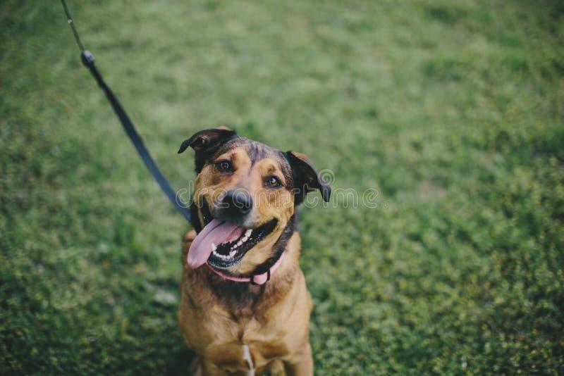 Een gelukkige hond royalty-vrije stock afbeeldingen