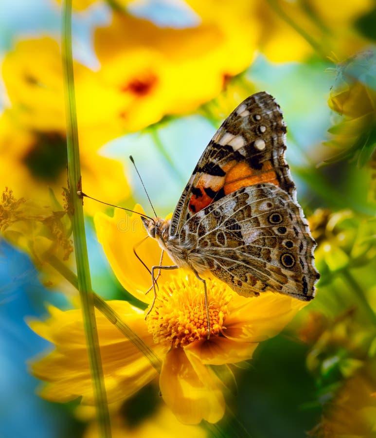 Een geschilderde damevlinder op een gele bloem stock afbeelding