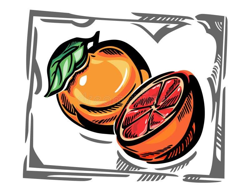 Een gestileerde vectorgrapefruit in grijs curvy kader vector illustratie