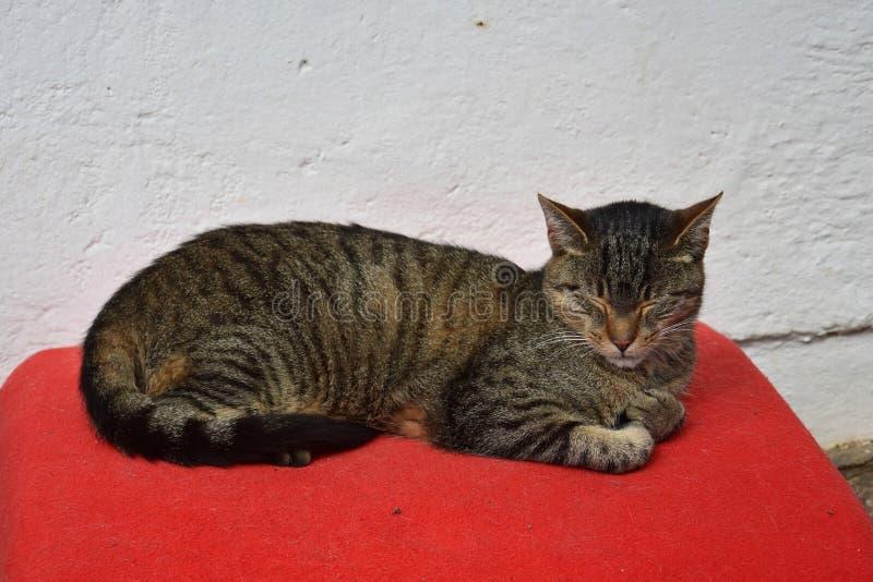 Een gestreepte katkat die op een rode deken rusten royalty-vrije stock foto