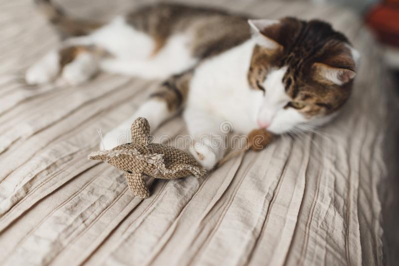 Een gestreepte volwassen kat ligt op de het bed en het spelen stuk speelgoed muis stock afbeeldingen