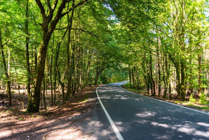 Een gevaarlijke landweg in een bos die van rendier enkel zo in Duitsland storten stock fotografie
