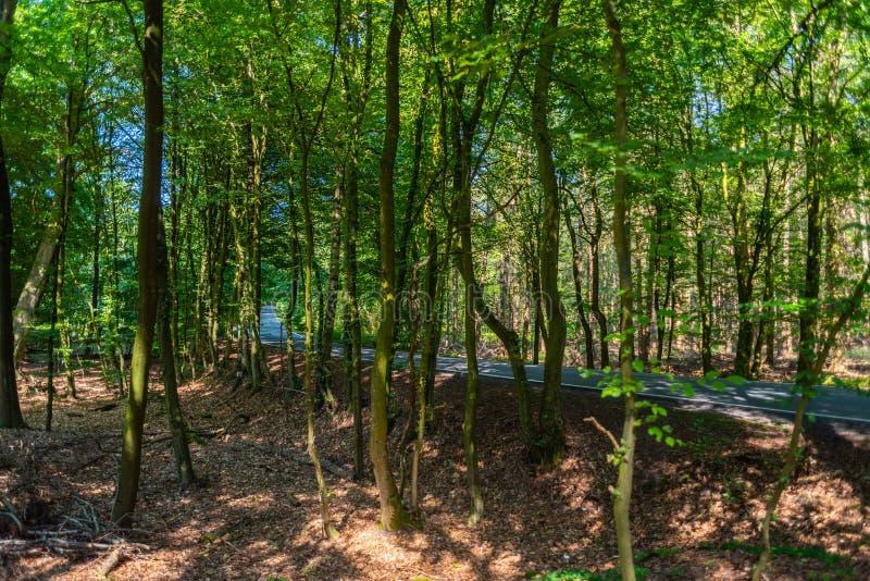 Een gevaarlijke landweg in een bos die van rendier enkel zo in Duitsland storten royalty-vrije stock foto's