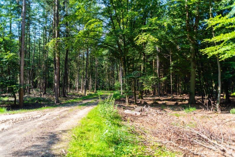 Een gevaarlijke landweg in een bos die van rendier enkel zo in Duitsland storten stock foto