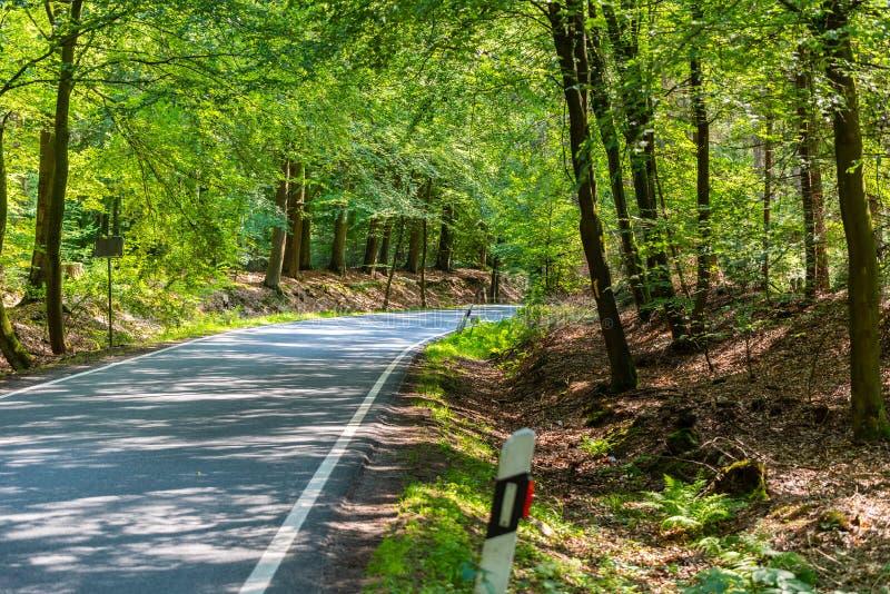 Een gevaarlijke landweg in een bos die van rendier enkel zo in Duitsland storten royalty-vrije stock fotografie
