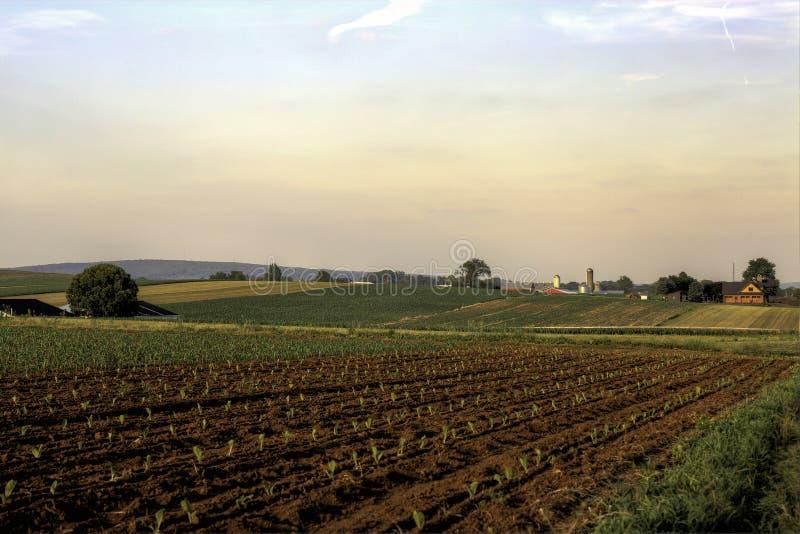 Een Gewas daarin begint met stadium bij een landbouwbedrijf van het land stock foto's