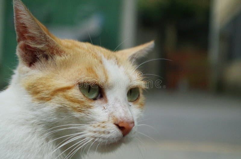 een gewonde verdwaalde kat royalty-vrije stock foto
