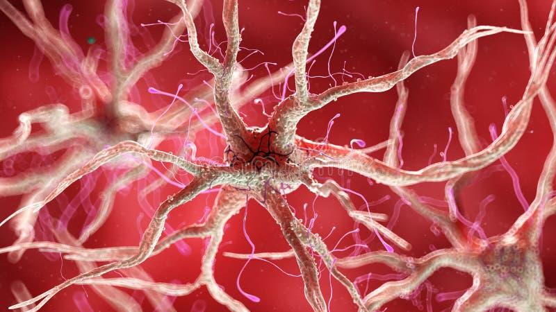Een gezonde menselijke zenuwachtige cel royalty-vrije illustratie