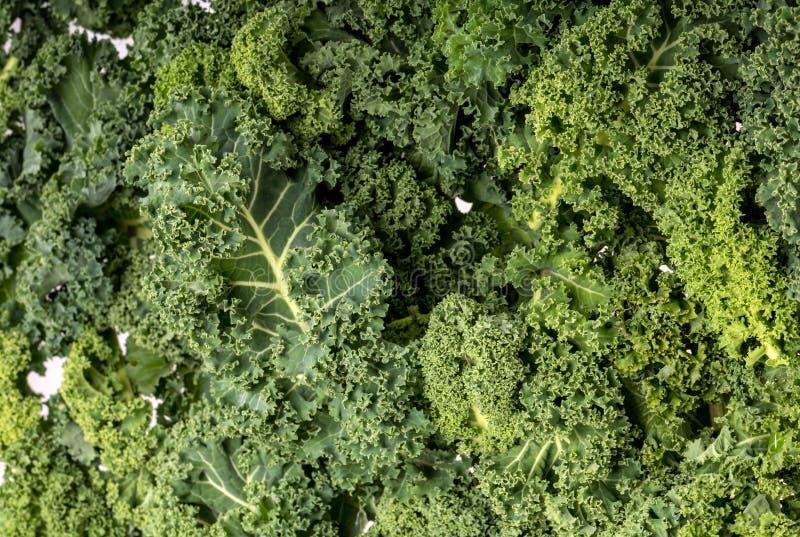 Een gezonde verse boerenkool stock fotografie