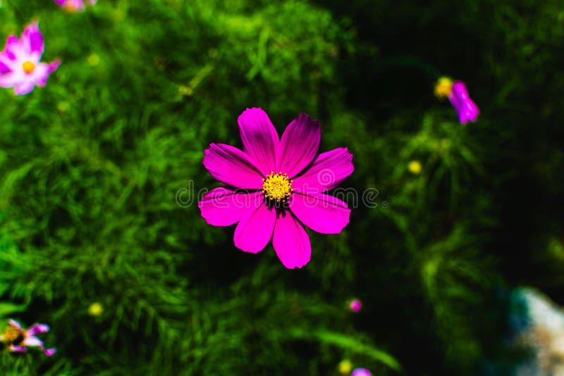 Een Glanzend bloemhoofd stock foto's