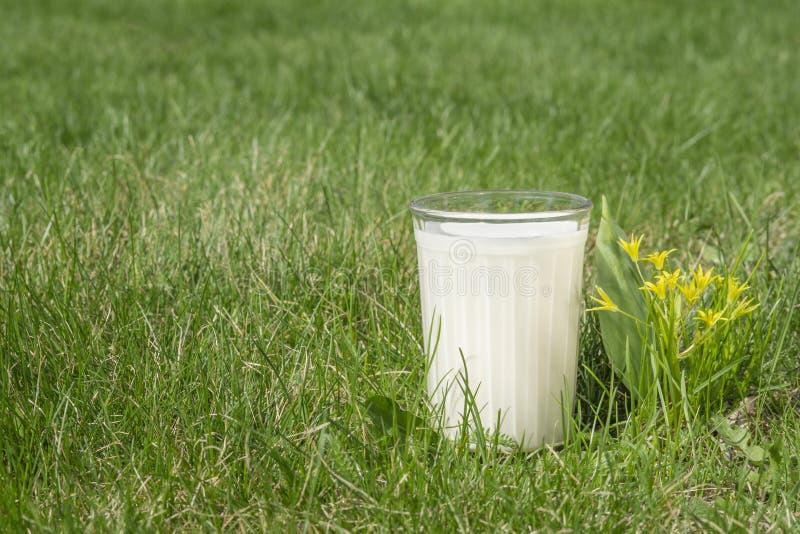 Een glas melk op groen gras royalty-vrije stock foto's
