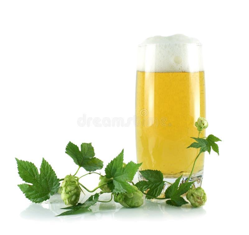 Een glas met bier en een geïsoleerde hop stock afbeeldingen
