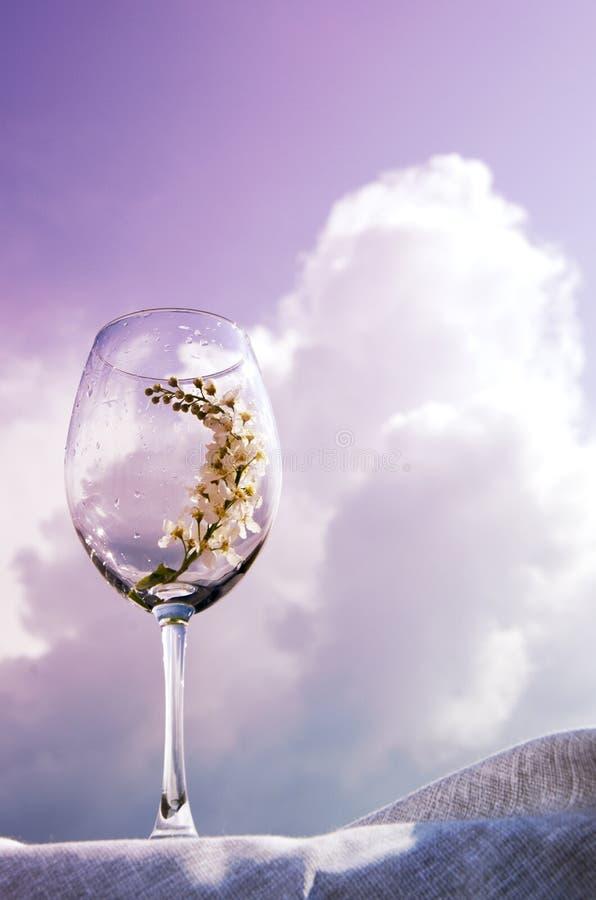 Een glas met een twijg van vogelkers bevindt zich op een textielservet op de bank van de rivier onder de zon Koraaltoon stock afbeeldingen