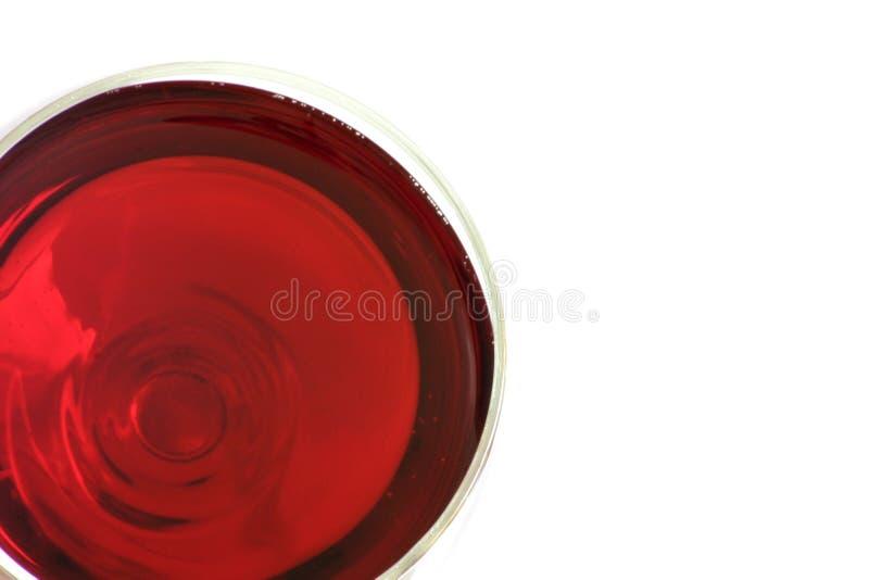 Een Glas Rode Wijn Royalty-vrije Stock Foto