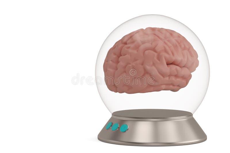 Een glasklok met basis en hersenen op witte 3D illustratie worden geïsoleerd die als achtergrond royalty-vrije stock afbeeldingen
