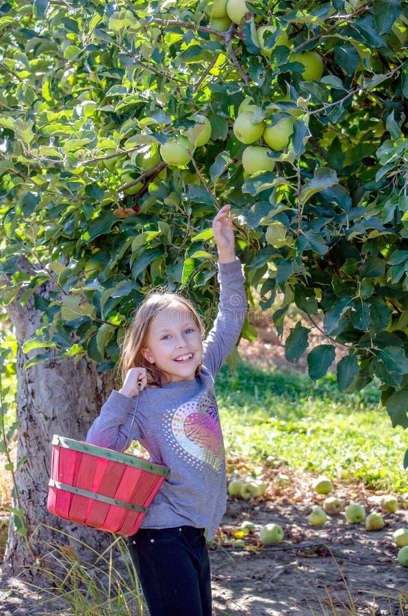 Een glimlachend meisje die de appelen van Michigan plukken royalty-vrije stock foto