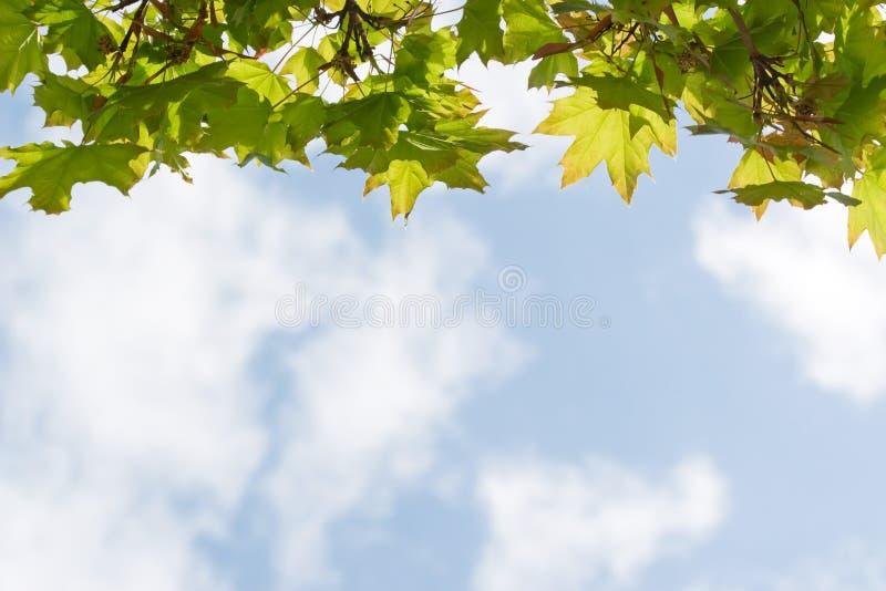 Een gordijn van groene bladeren stock foto's