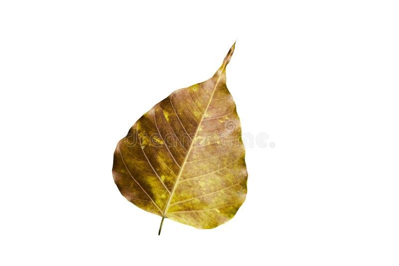 Een gouden blad isoleert op witte achtergrond vector illustratie