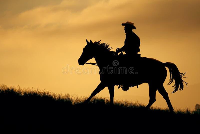 Een gouden weidehorseback rit. stock foto's