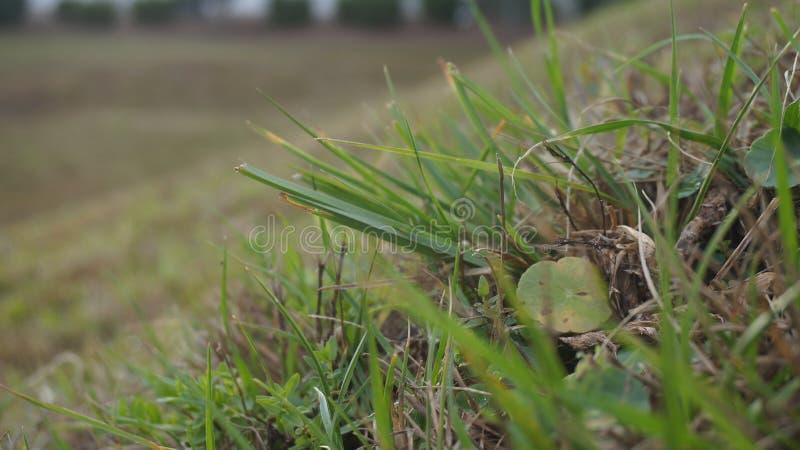 Een gras stock afbeeldingen