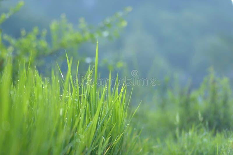 een gras met ochtenddauw stock fotografie