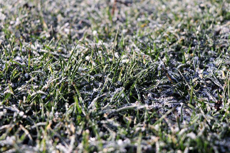 Een gras met sneeuw in de ochtend wordt behandeld die stock foto