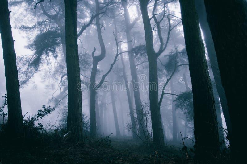 Een griezelig die bos met bomen tegen de mist worden gesilhouetteerd stock afbeelding