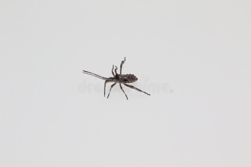 Een grijs insect op een witte achtergrond royalty-vrije stock afbeeldingen