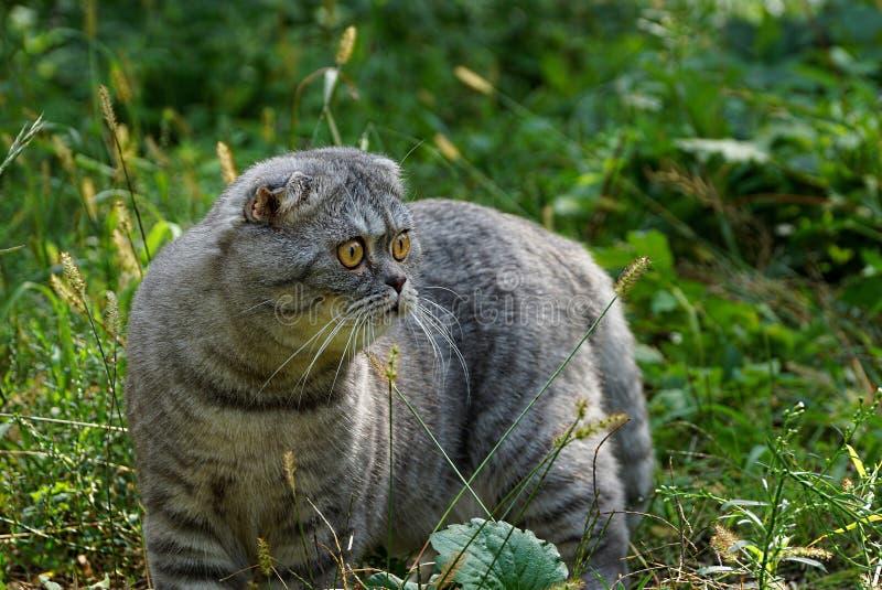 Een grijze kat bevindt zich onder het gras en de installaties in de tuin royalty-vrije stock fotografie