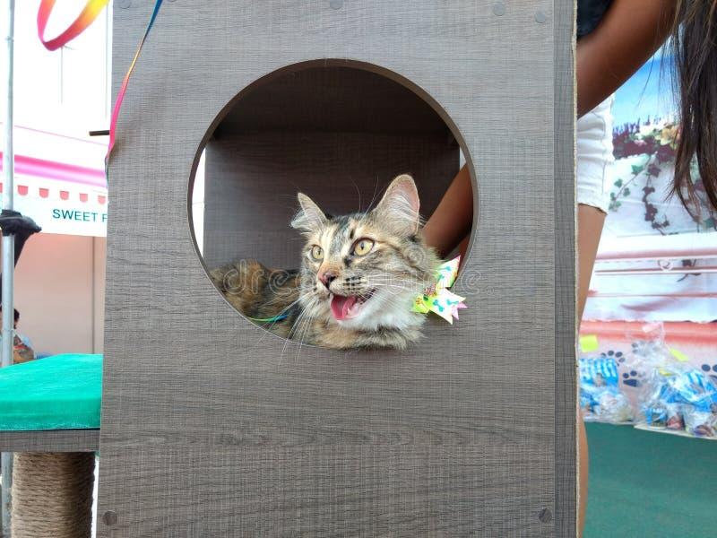 Een grijze kat in katten betwist stock fotografie