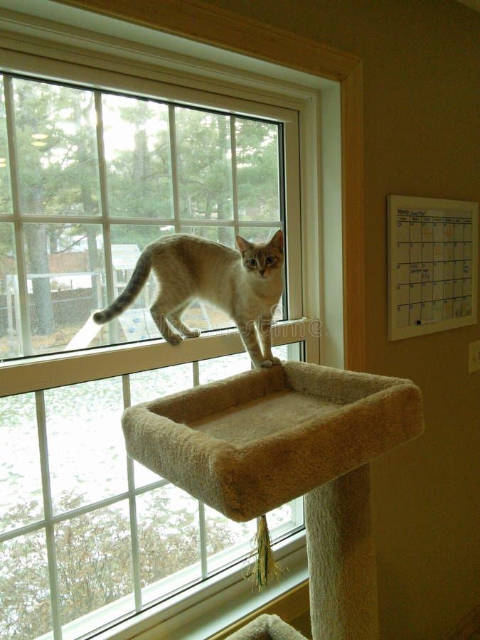 Een grijze kat op een venster stock foto