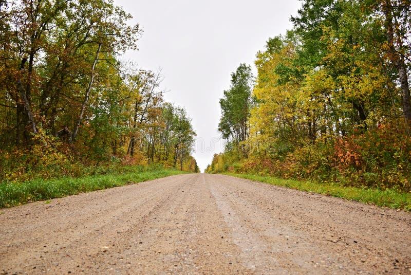 Een grintweg door een bos stock afbeelding