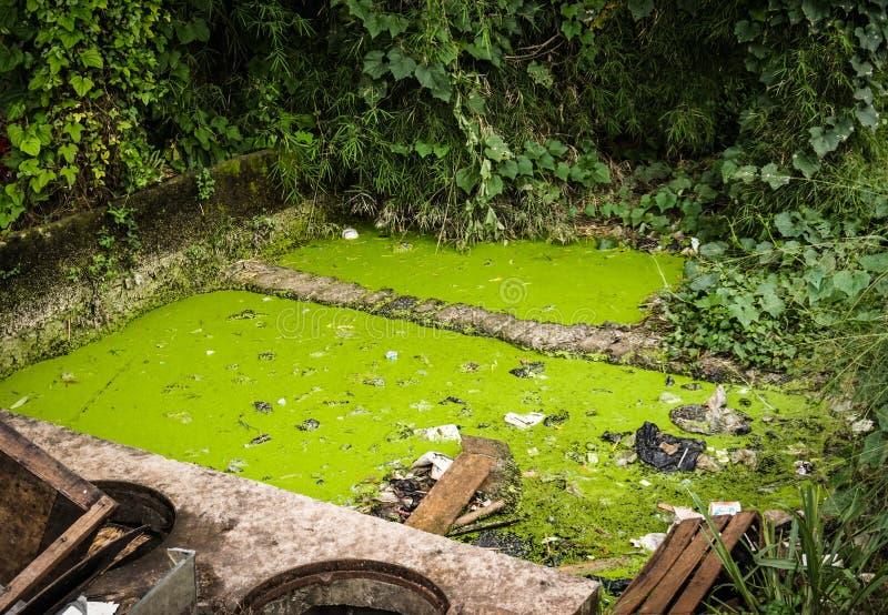 Een groene bemoste vuile die sloot bij binnenplaatsfoto in Semarang Indonesië wordt genomen stock foto