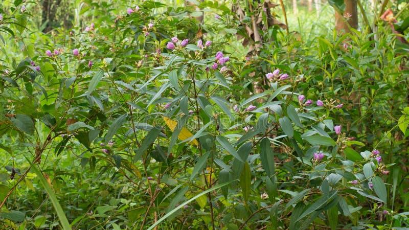 Een groene installatie en bloemen bij tuin stock foto