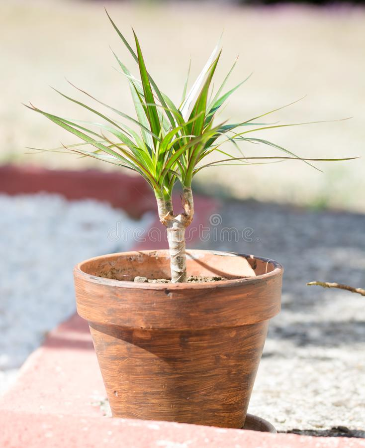 Een groene jonge plant in een pot stock foto