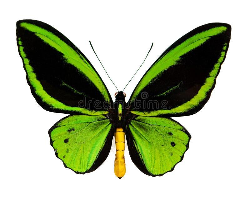 Een groene vlinder stock foto's