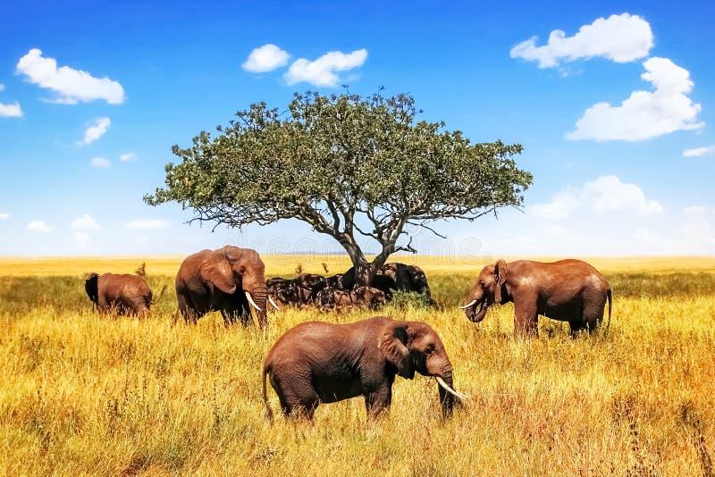 Een groep Afrikaanse savanneolifanten tegen de achtergrond van een boom en een blauwe hemel in het Nationale Park van Serengeti a royalty-vrije stock foto's