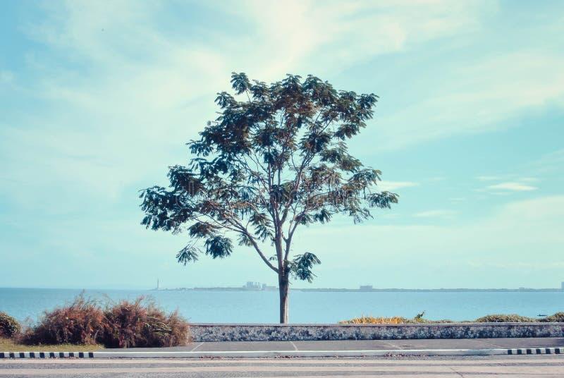 Een groep boom die voor commerciële doeleinden en spot op ontwerpen kan worden gebruikt stock fotografie