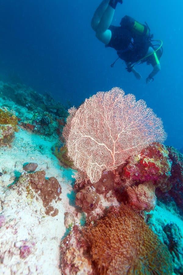 Een groep duikers dichtbij een koraalmuur met, de Maldiven royalty-vrije stock foto's
