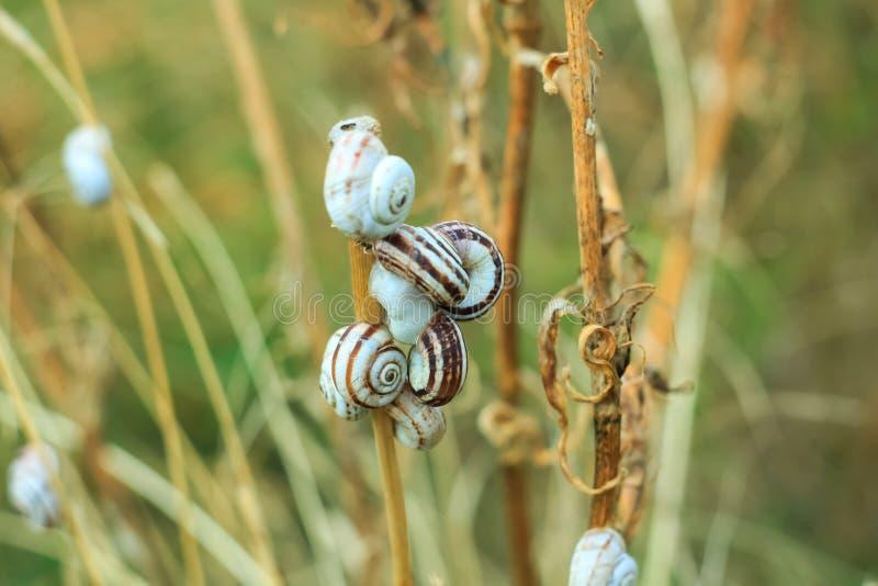 Een groep kleine steppeslakken bovenop installatie stamt, droog grasgebied royalty-vrije stock foto's